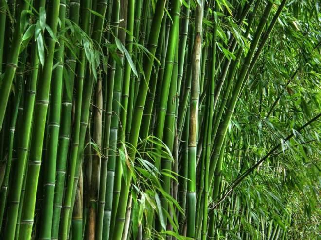 CT-Bamboo