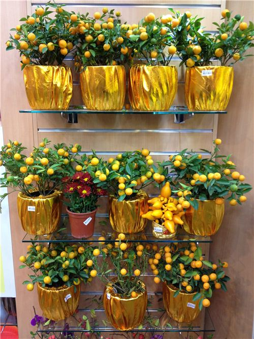 Now is the time to buy a mandarine tree - it stands for good luck