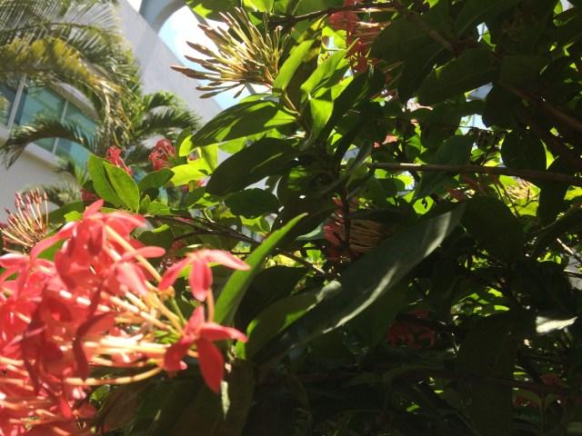 Häufige Pflanzenpracht in Myanmar