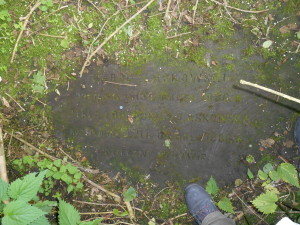 Malice -Stary Cmentarz 16