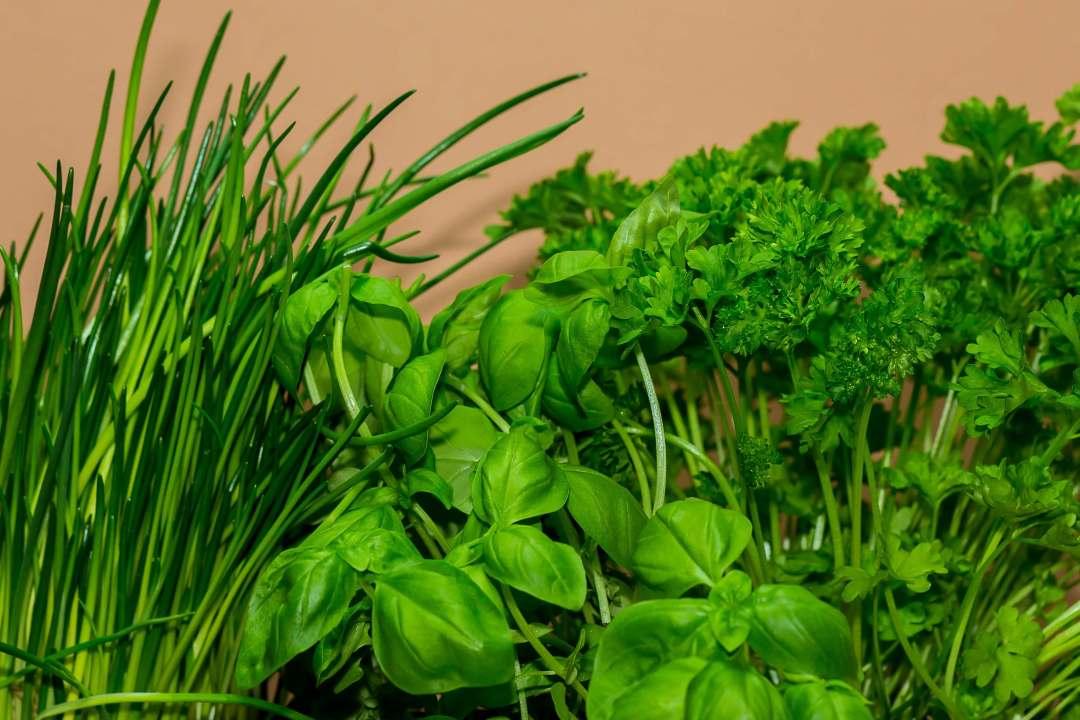 Quelles plantes aromatiques dans la cuisine - Je jardine ...