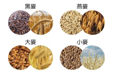 麥麥大學問 各種麥類到底有什麼不同?