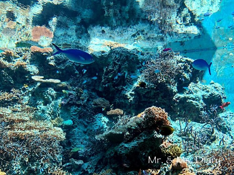 日本沖繩 4 天 3 夜旅遊規劃--瀨長島飯店、賞鯨、螃蟹吃到飽、海生館 25