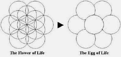 La fleur de Vie et L'œuf de Vie