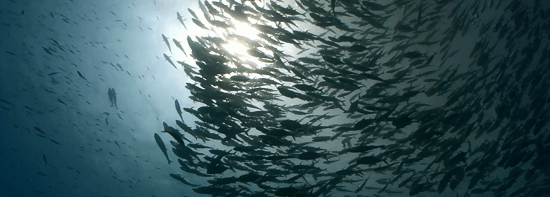 MSC global What does sustainable fishing really mean? - MSC