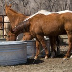 Stock Tank Uses - Horse Water Tank