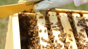 Registering beehives with the state