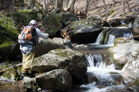 Native Brook Trout Fishing in Virginia