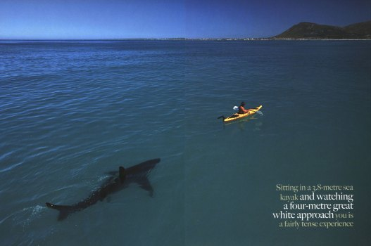 The original photo of the shark.