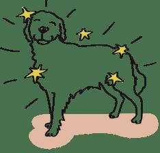Frischfutter sorgt für glänzendes Hundefell.