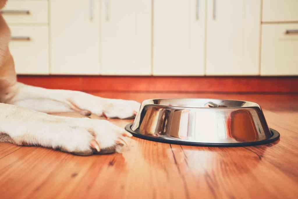 Eine saubere Wohnung trotz Hund, dank Spülmaschine.