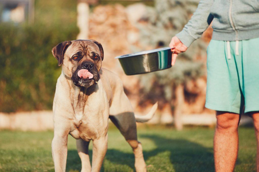 Hund sieht Futternapf mit Ei an