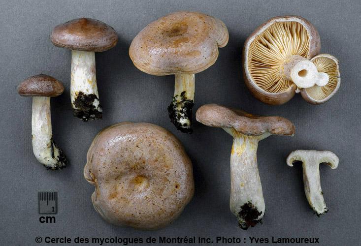Potins mycologiques du 22 août 2014