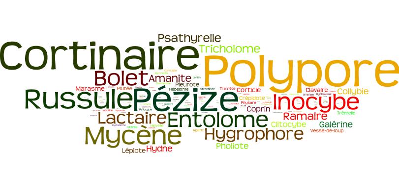 Nom de champignons (Avril 2015)