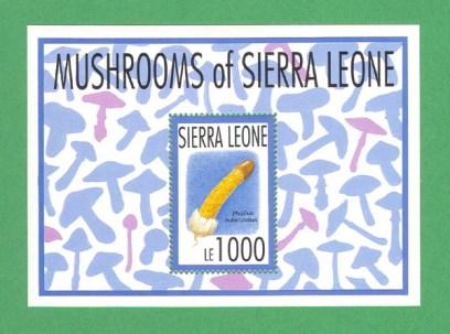 SierraLeo1