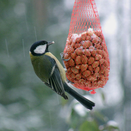 Photo of a Bird Feeding by OliBac used under a creative Commons License http://www.flickr.com/photos/olibac/4272889453/sizes/z/