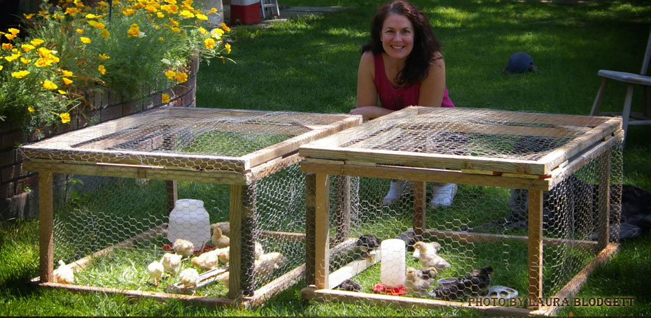 Laura and her Chickens