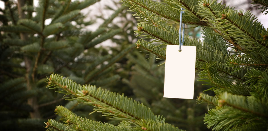Christmas Tree with Tag on it