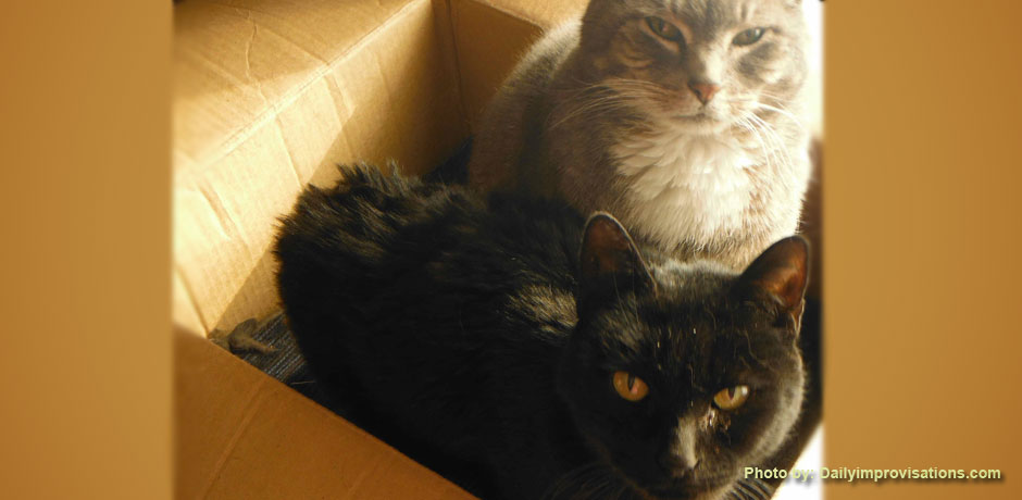 Happy, warm cats in a box