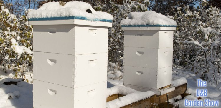 02062016_beehives-in-the-winter-with-snow