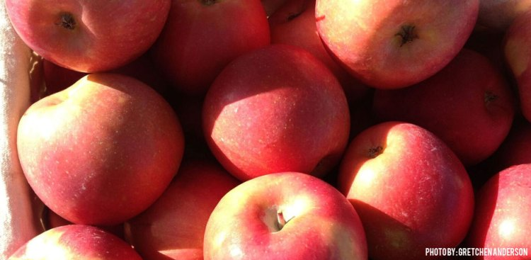 05302016_apples-in-a-basket