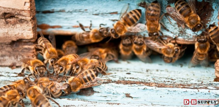09132016_bees-clustered