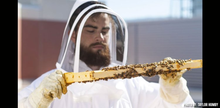 10232018_bee-inspection-at-boise-state-by-Taylor-Humby