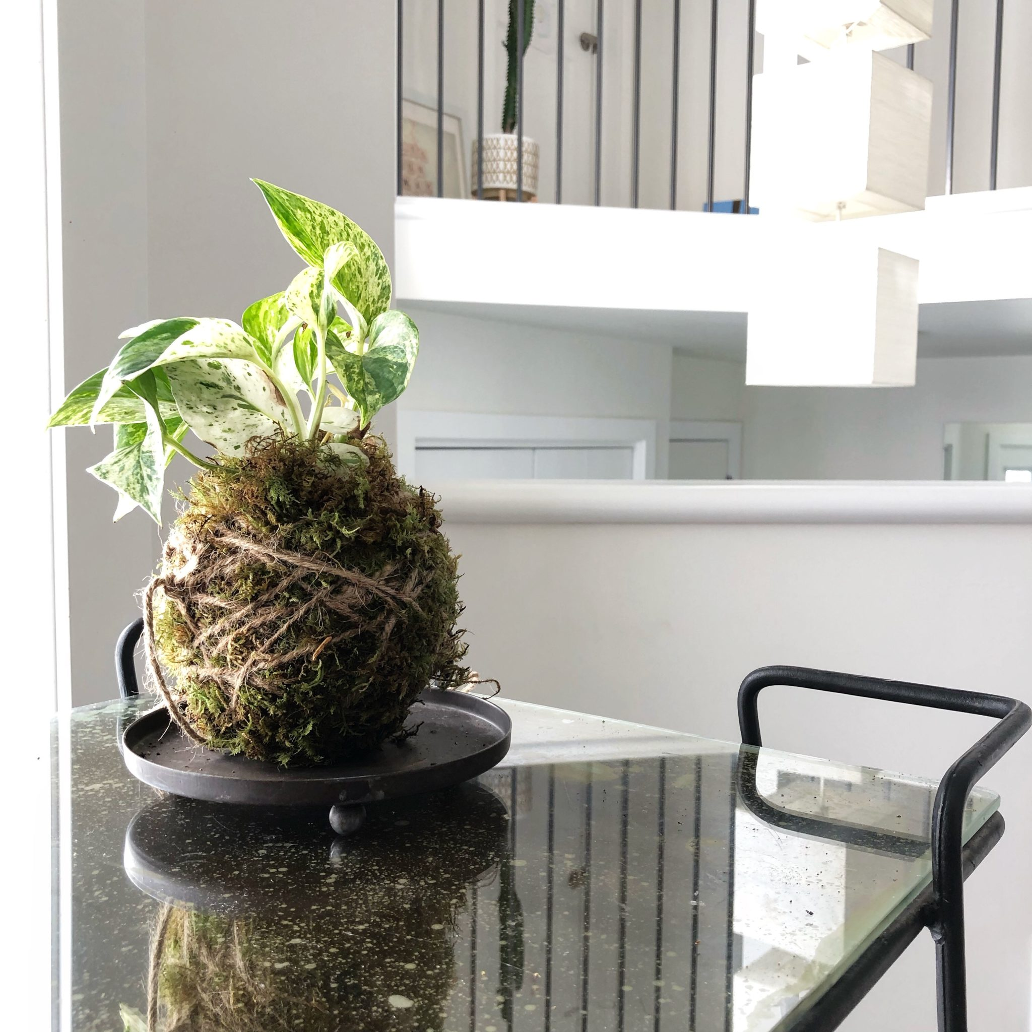 Ways To Decorate With A Kokedama Moss Ball My Tasteful Space