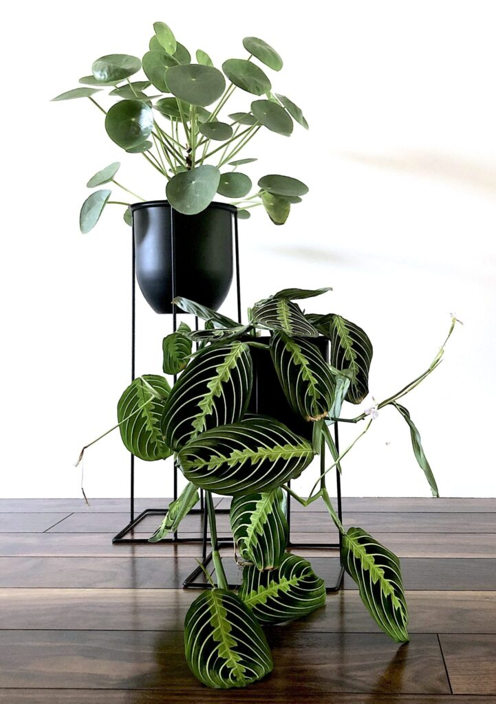 Unique Plant Stands Ideas for Your Home - My Tasteful Space on House Plant Stand Ideas  id=75942