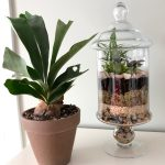 Closed Terrarium 101 7 Easy Steps To Build Your Glass Terrarium My Tasteful Space