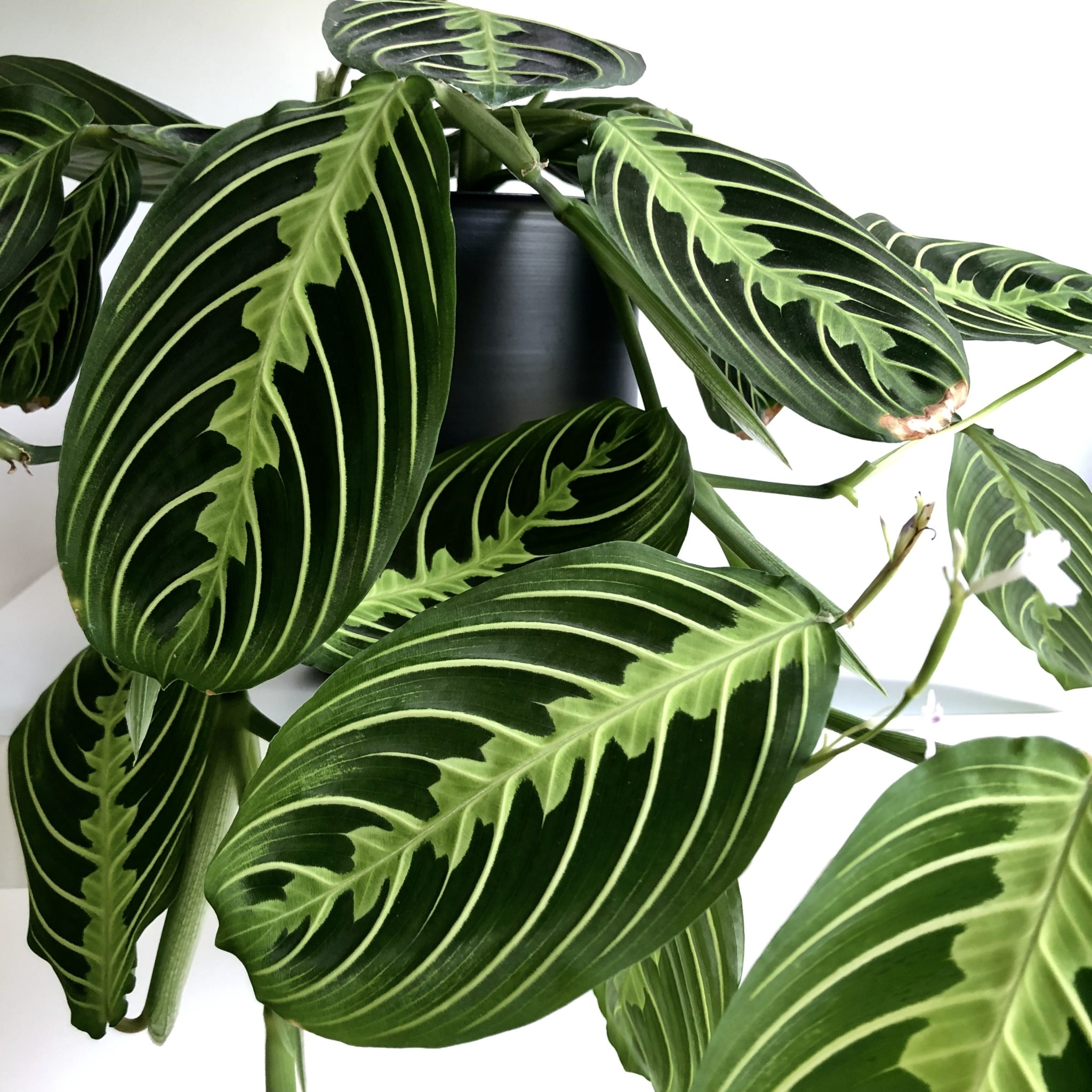 Beautiful Leaves 10 Beautiful House Plants That Are Easy To Find At Your Local Store My Tasteful Space