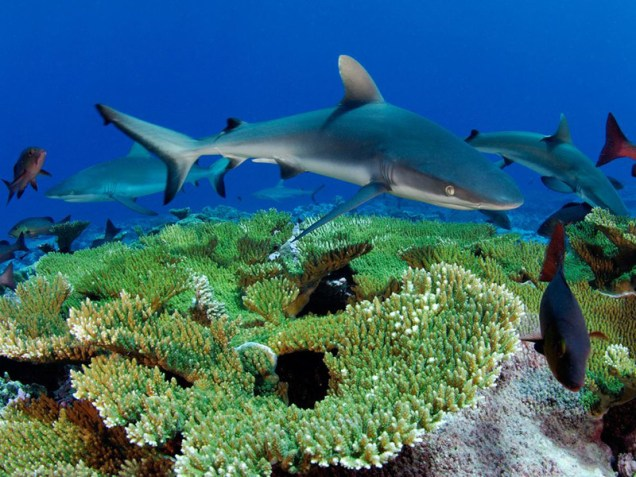75 millions sharks used every year for shark fin soup