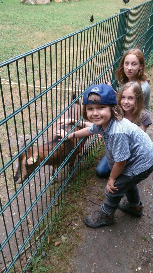 Kleine Exkursion zum Tiergehege