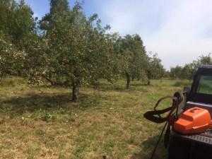 Apfelbaumwiese am 1. August 2015 Foto von Manfred Becker