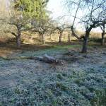 Stilleben mit Raureif und totem Baum