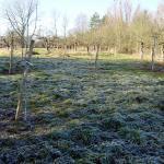 die neuen Apfelbäume mit Weissanstrich und Schutz vor Verbiss