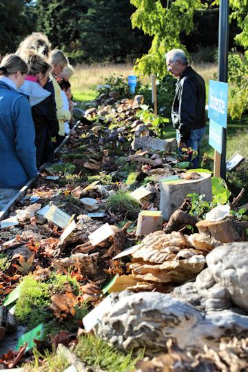 Pilzausstellung Rostock