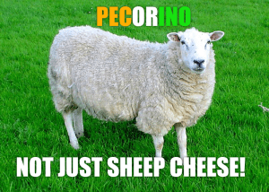 pecora sheep explains pecorino is not just cheese