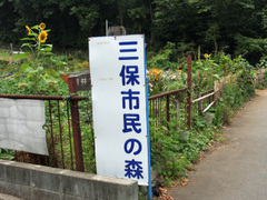 Miho_forest_01