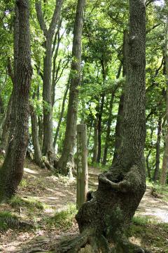 Kamariya_forest_06
