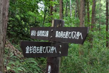 Kamariya_forest_17