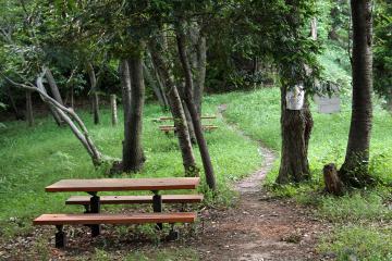 Kamariya_forest_24
