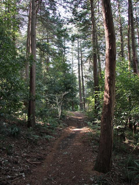 Yasashi_forest_06