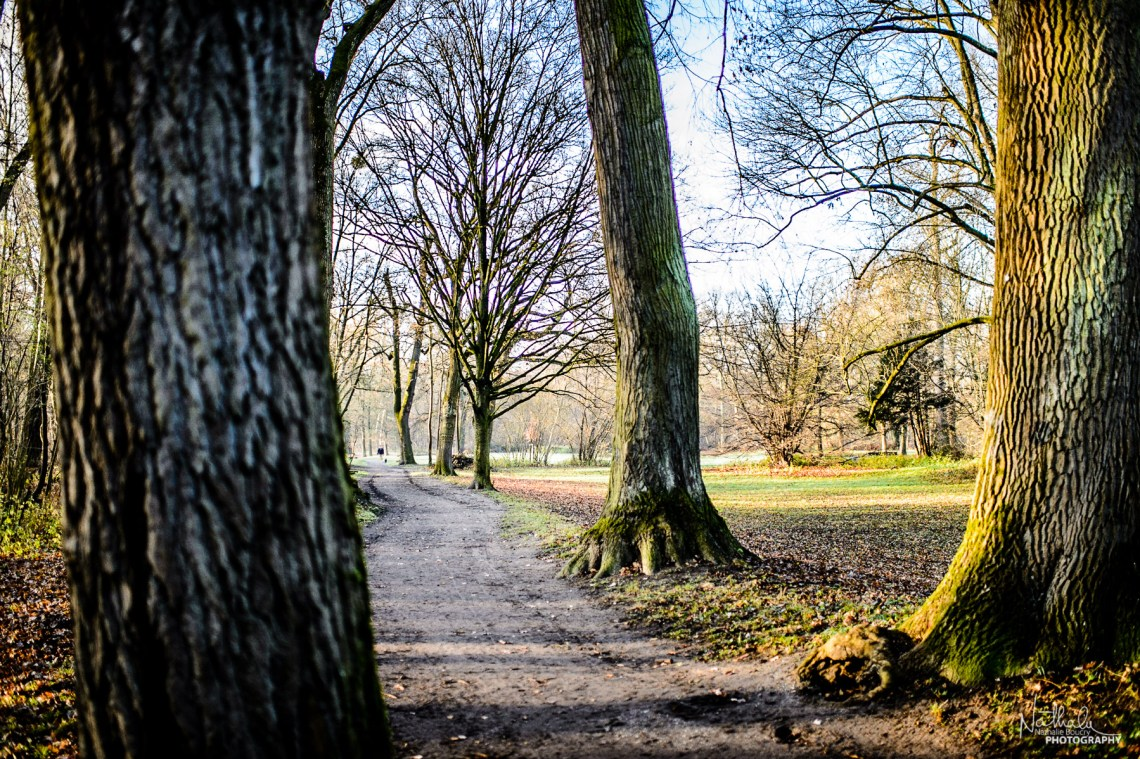 A Sunny Sunday Morning Stroll | Waldpark, Mannheim, Germany Dece