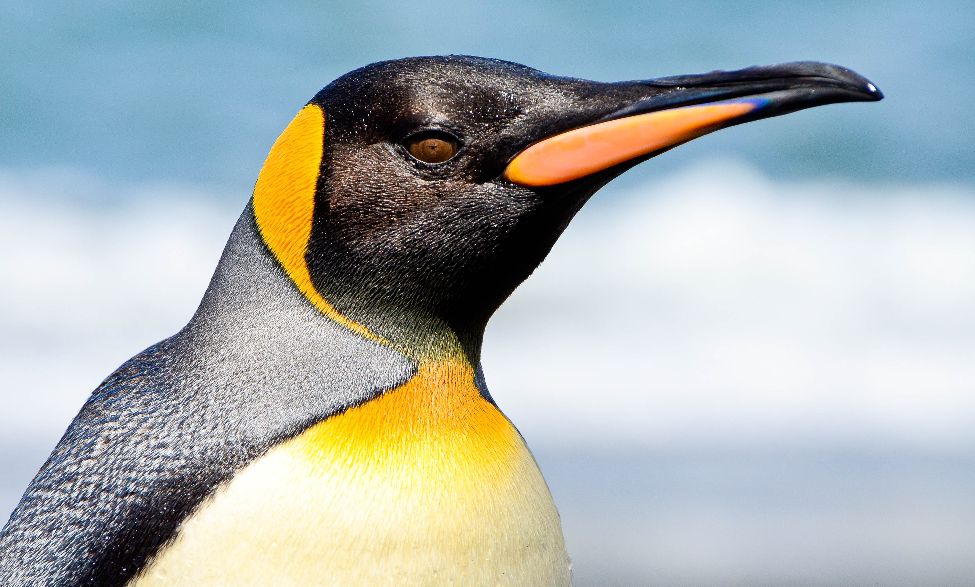 Top 25 Wild Bird Photographs Of The Week 74 National