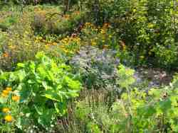 Wandelende Kruiden in de Natuurlijke Tuin