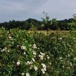 7 Voordelen van een (Gemengde) Haag in je Tuin
