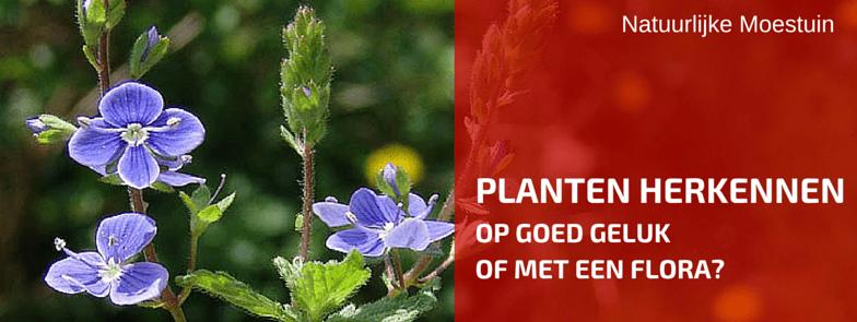 Een Hulpje in Je tuin Om Planten Te Herkennen