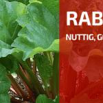 Plantbespreking: Rabarber (Rheum rhabarbarum)