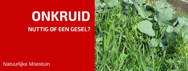 Onkruid In Je Tuin: Nuttig of een Gesel?
